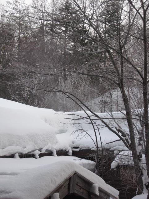 泡の湯の樹氷です
