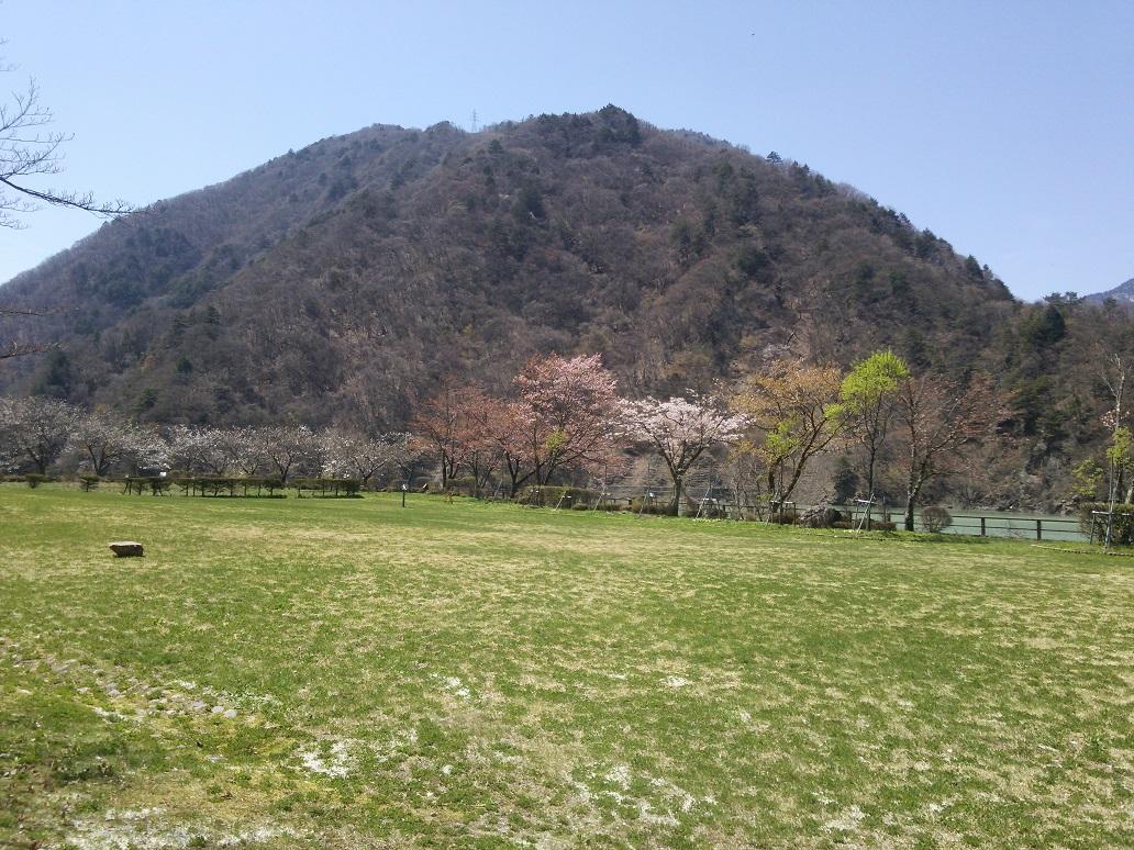 桜 (3).JPG