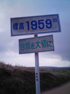 新緑びゅてほー v(=^0^=)v