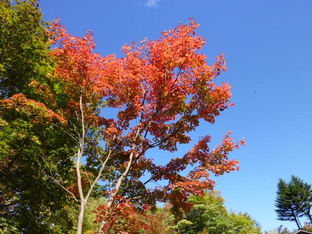 秋ですね その2
