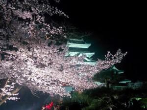 松本城夜桜_01
