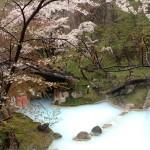 桜と露天02