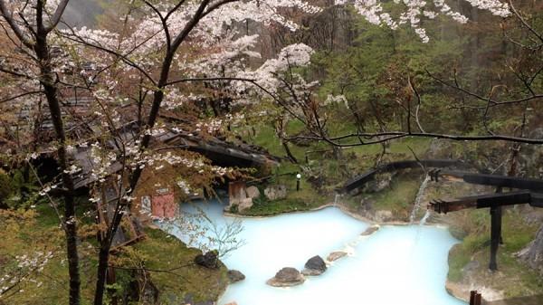 今日の桜と露天風呂
