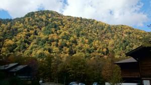 もみじの葉が鮮やかです。